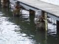 Brooklyn Baths on the Hawkesbury River