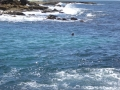 Clovelly Bay for the rock pool experience