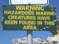 Hazardous marine creatures at Mahon Pool at Maroubra