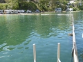 Swimming enclosure at Paradise Beach on Pittwater