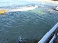 High tide at Wally Weekes Pool in North Bondi