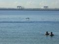 Brighton-le-Sands swimming enclosure