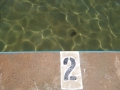 Collaroy Rock Pool