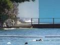 Parsley Bay Baths