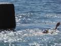 Swimming the back stroke in Ross Jones Memorial Pool in Coogee