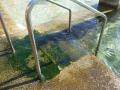 Getting into Ross Jones Memorial Pool in Coogee